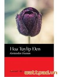Hoa Tulip Đen
